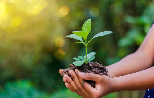 Reducing the Environmental Impact of our Work